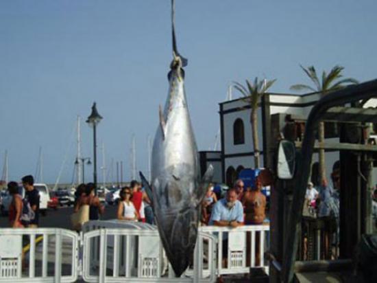 tuna180kg