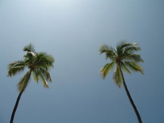 ett_liv_i_solen